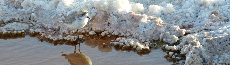 Bird in Atacama Chile