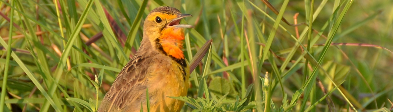 Birding in Rietvlei Nature Reserve South Africa