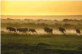 Kenya & Tanzania Migration Safari tour