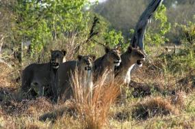 Moremi and Chobe to Vic Falls Safari tour
