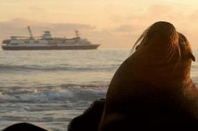 Discover the Galápagos & Peru with the Amazon tour