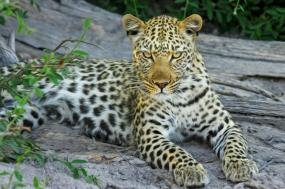 Botswana:Under African Skies tour