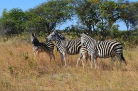 Southern Africa: South Africa, Zimbabwe, Namibia and Botswana