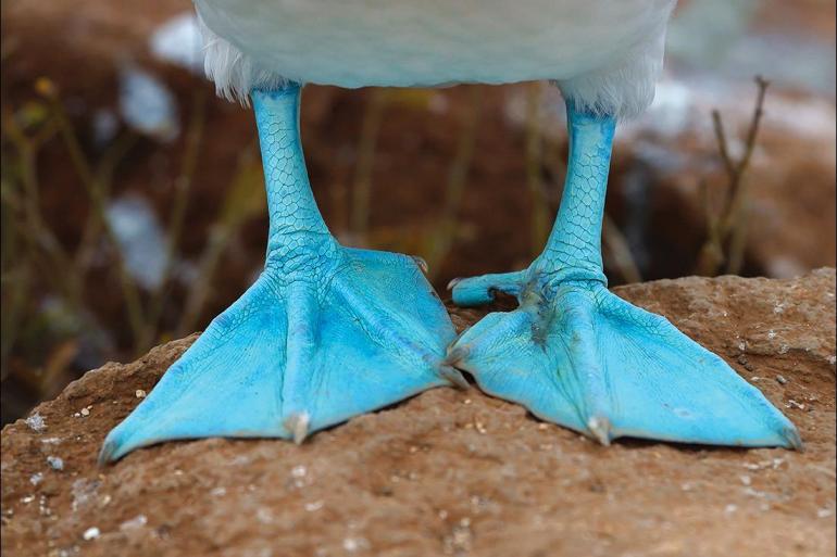 Darwin Galapagos Galapagos Adventure: Northern Islands (Daphne) Trip