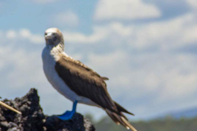 Galapagos Voyager: Central Islands (Grand Queen Beatriz) tour