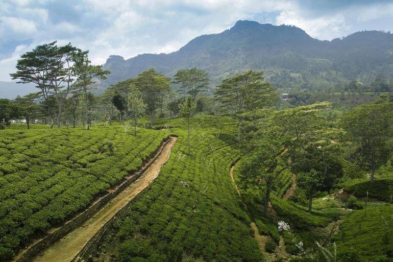 Treasures of Sri Lanka And Dubai tour