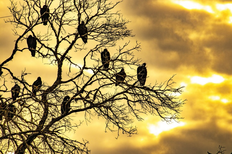 View of birds on Dead tree during sunset-United States-3794054-1920-P