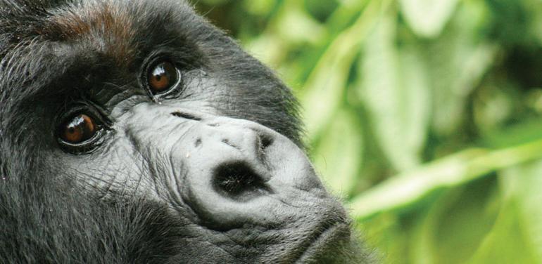 Johannesburg to Gorillas tour