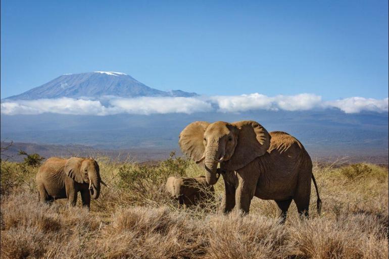 Safari Land expedition Kilimanjaro & Serengeti Adventure package