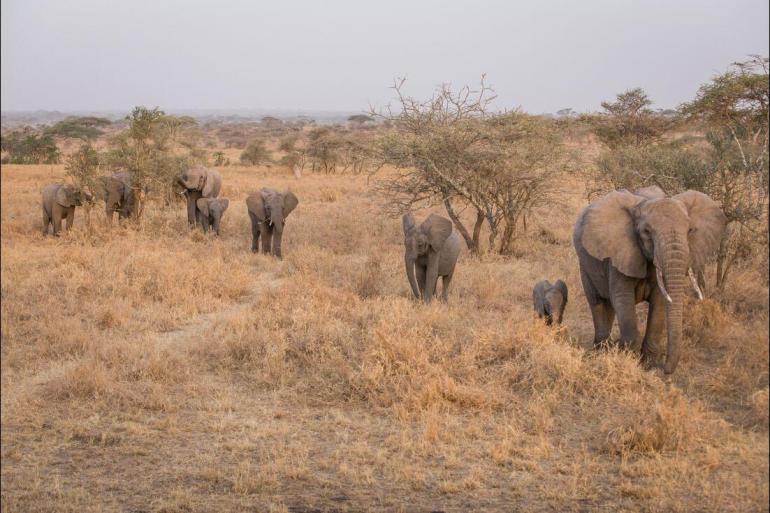 Nature & Wildlife Hiking Serengeti & Kilimanjaro package