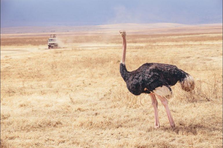 National Parks Wildlife viewing Safari to Kilimanjaro - Machame Route package