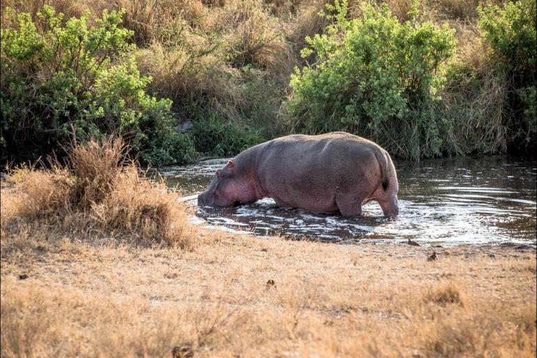Safari Land expedition Safari to Kilimanjaro - Machame Route package