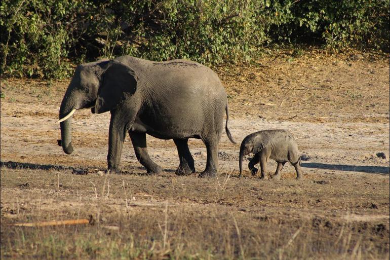 Victoria Victoria Falls Chobe National Park Short Break Trip