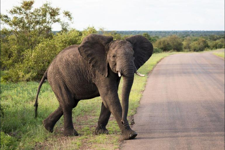 Nature & Wildlife Land expedition Kruger to Vic Falls package