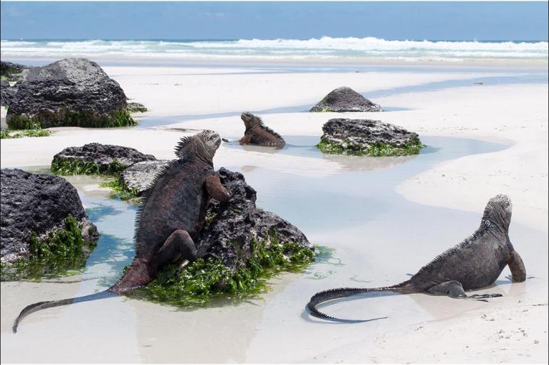 San Cristobal Santa Fe Complete Galapagos (Grand Daphne) Trip