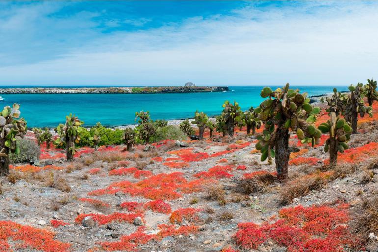 Darwin Galapagos Galapagos at a Glance: Southern Islands (Grand Daphne) Trip