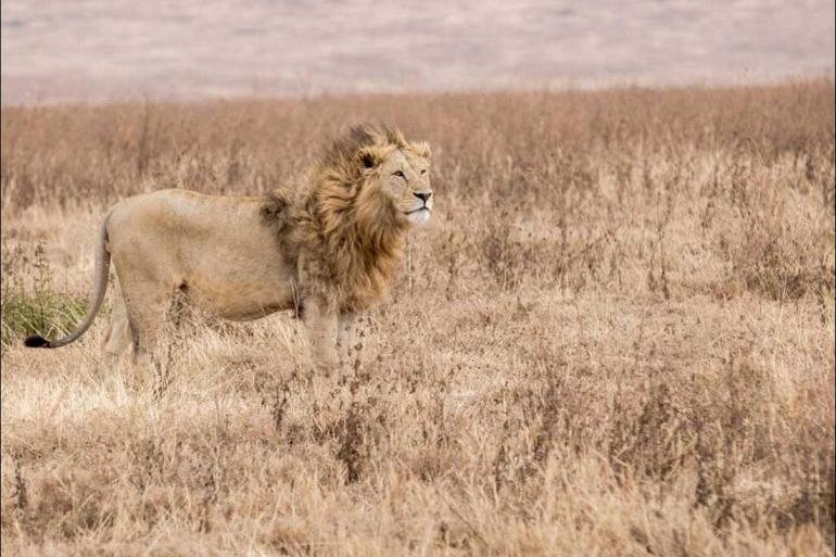 Arusha Chobe National Park Johannesburg to Gorillas Trip