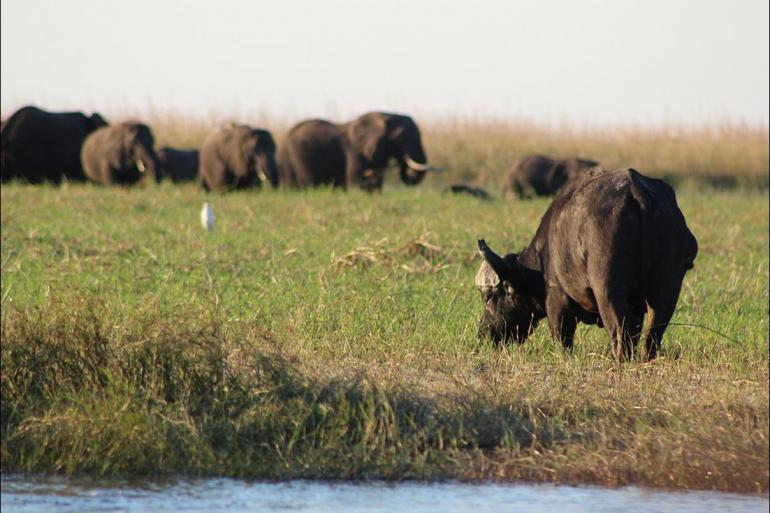 Cultural Relaxing Retreat Chobe National Park Short Break package