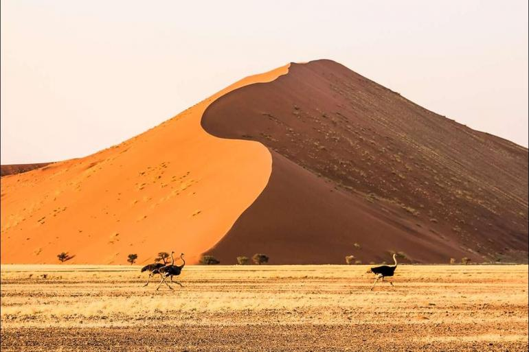 Safari Wildlife viewing Africa Encompassed Southbound package