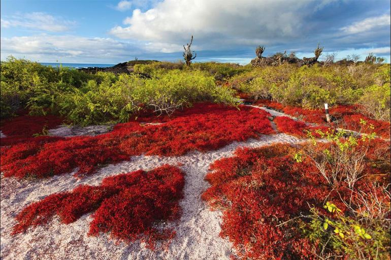 Isla Floreana Isla Santa Fe Complete Galapagos (Grand Daphne) Trip