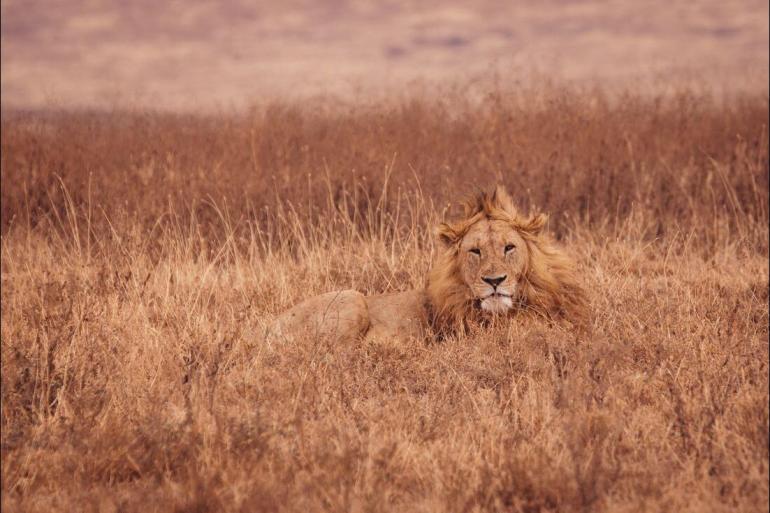 National Parks Wildlife viewing Kilimanjaro & Serengeti Adventure package