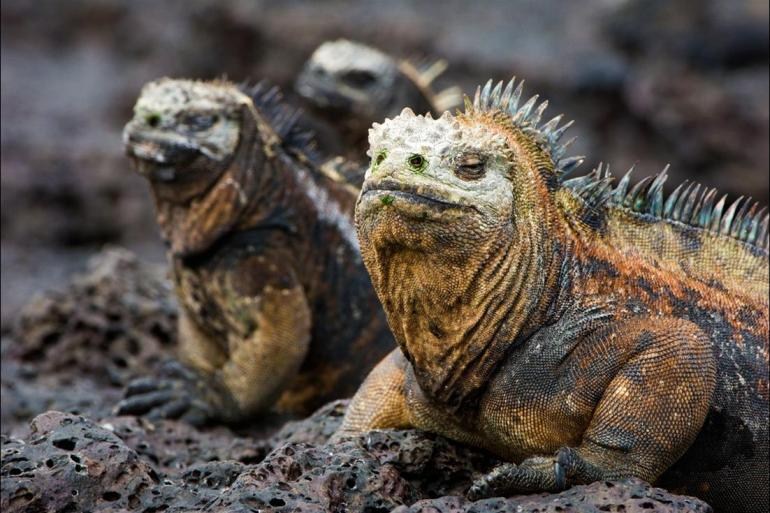 Guayaquil Isla Baltra Complete Galapagos (Grand Daphne) Trip