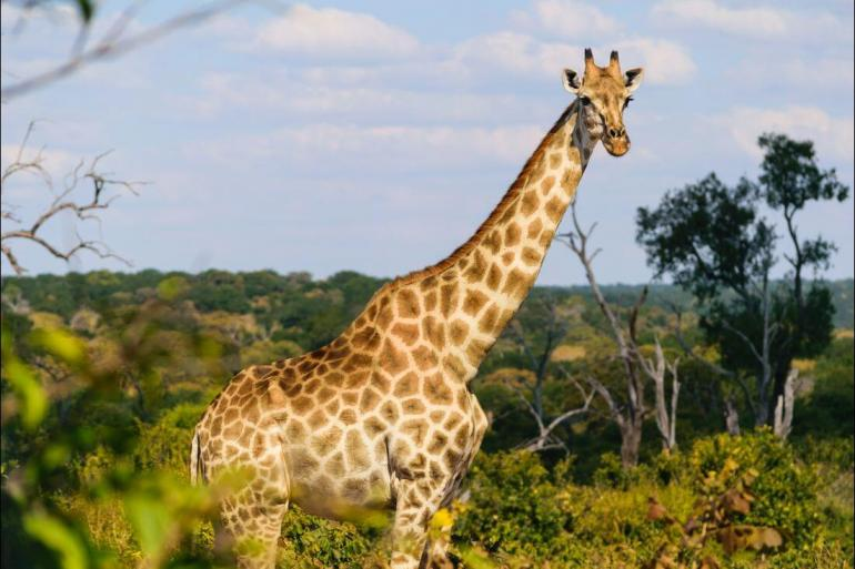 Kruger National Park Maun Experience Southern Africa Trip