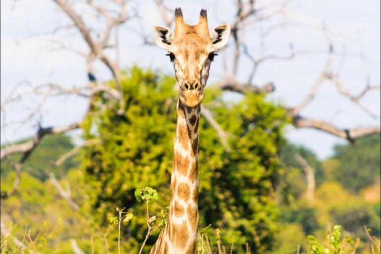 Kasane Makgadikgadi Pans Amazing Southern Africa Trip