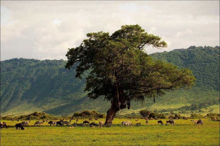 Safari Land expedition Serengeti & Kilimanjaro package
