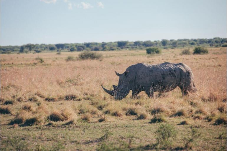National Parks Wildlife viewing Experience Southern Africa package