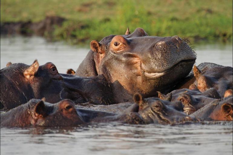 Okavango Delta Soweto Experience Southern Africa Trip