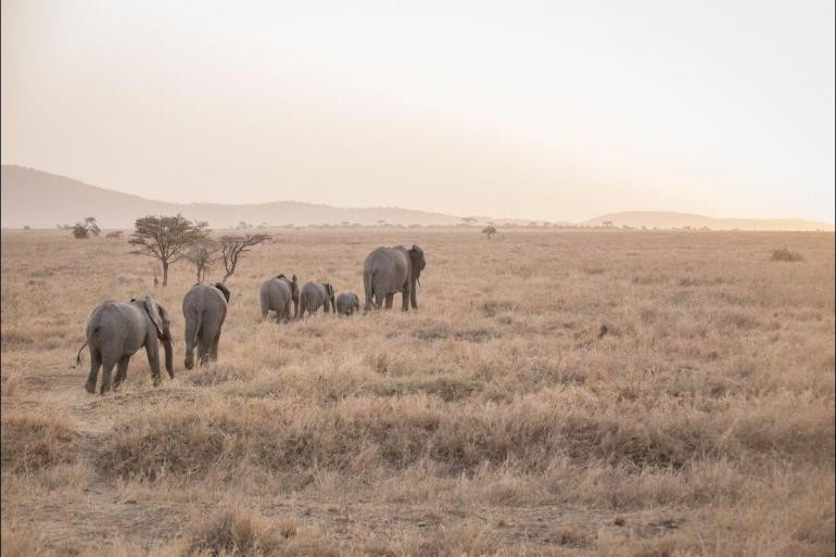 Nature & Wildlife Hiking Safari to Kilimanjaro - Machame Route package