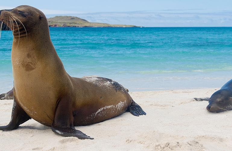 Galapagos Island Hopping tour