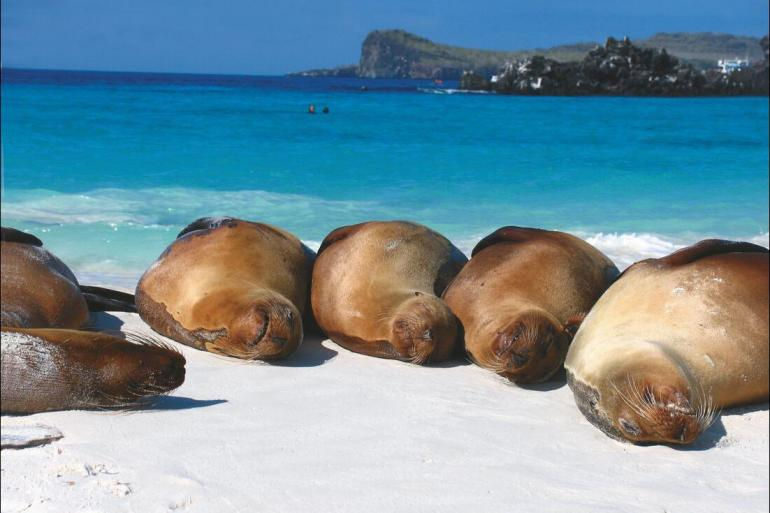 Nature & Wildlife Sailing Complete Galapagos (Grand Daphne) package