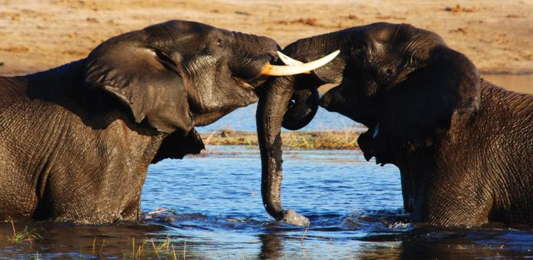 Experience Botswana tour