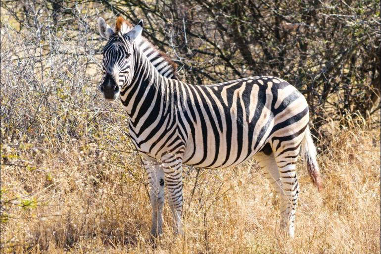 National Parks Wildlife viewing Amazing Southern Africa package
