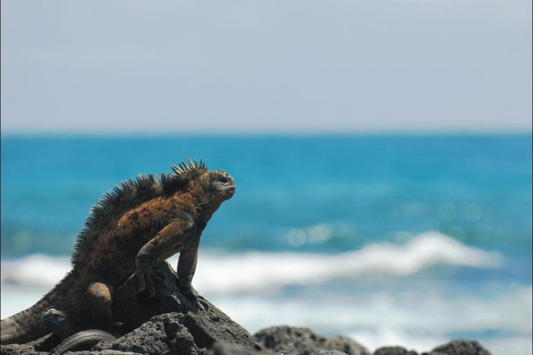 Nature & Wildlife Sailing Galapagos at a Glance: Southern Islands (Grand Daphne) package