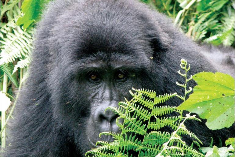 Lusaka Maun Johannesburg to Gorillas Trip