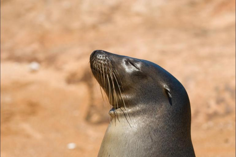 Sailing Wildlife viewing Galapagos at a Glance: Southern Islands (Grand Daphne) package