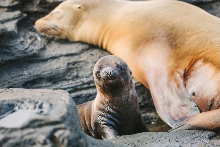 Darwin Galapagos Galapagos Island Hopping Trip