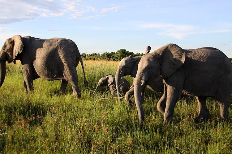 Chobe National Park Makgadikgadi Pans Experience Botswana Trip