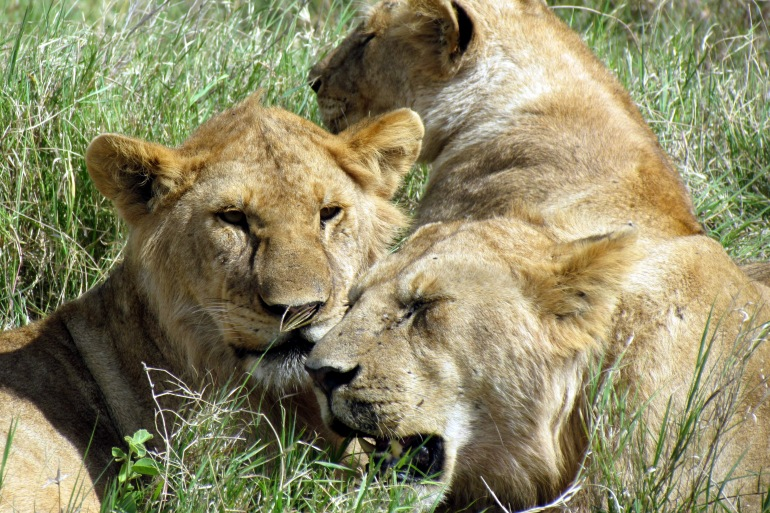 Arusha Dar es Salaam Tanzania Wildlife Safari Trip