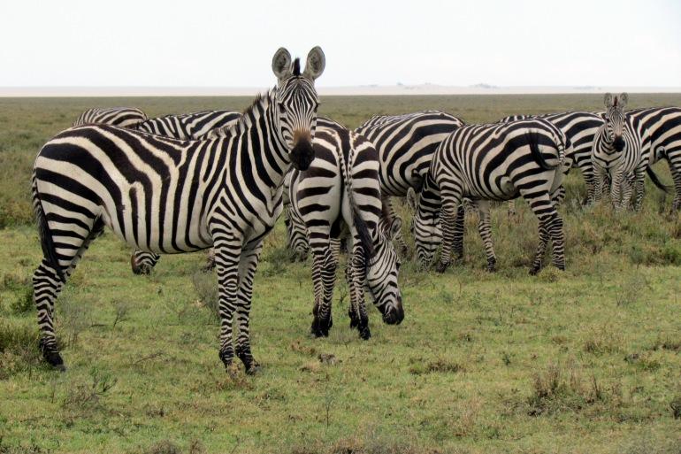 Tanzania Wildlife Safari tour