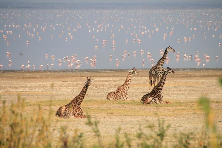 Tarangire National Park Zanzibar Tanzania Wildlife Safari Trip