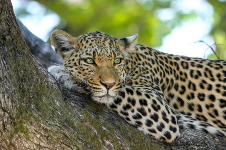 Johannesburg Kasane Ultimate Africa: Botswana, Zambia & Zimbabwe Safari Trip