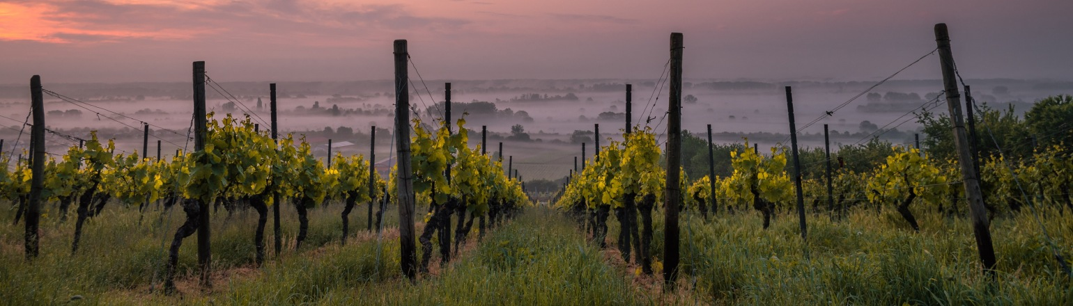 Vineyard tour at dusk, top travel experience in Burgundy