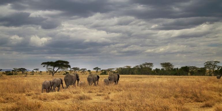 Masai & Tanzania Camping Safari tour