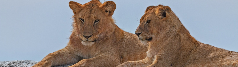 Africa Tanzania Serengeti National Park