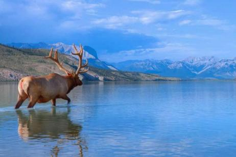 Panoramic Canadian Rockies with Alaska Cruise Oceanview Cabin Summer 2019 - CostSaver tour