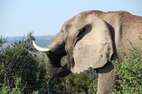 11 Days Cape Town and Safari tour